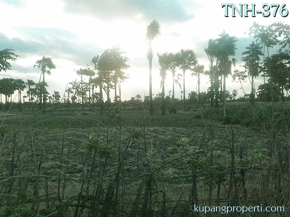Dijual Tanah #1 Ha di Kabupaten Kupang