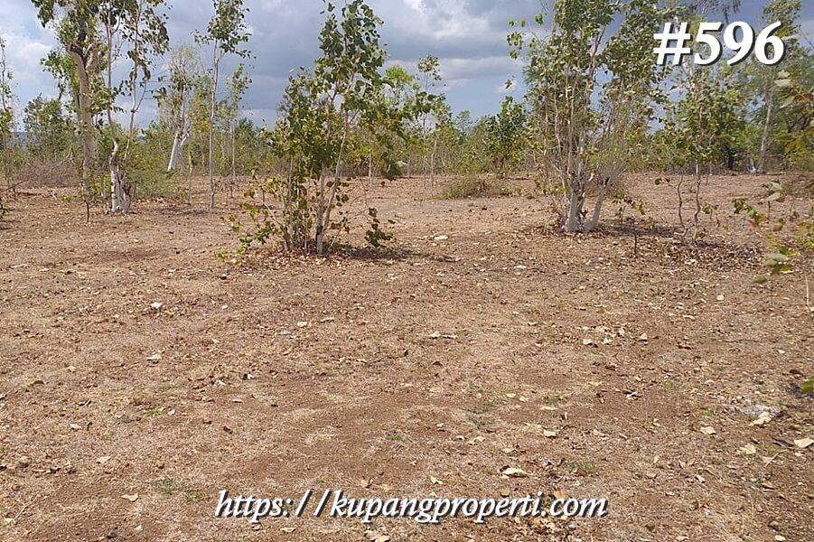 #596 Dijual Tanah di Manusak Kab. Kupang